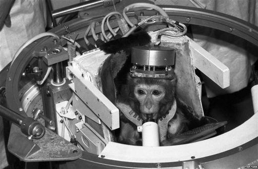 monkey-space